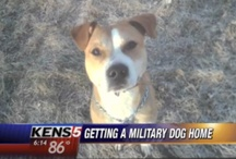 Pets In the News