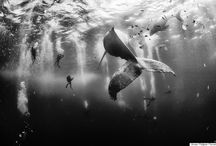 National Geographic Traveler Photo