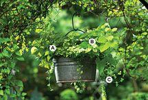 gardening ideas / by Ava Darnell