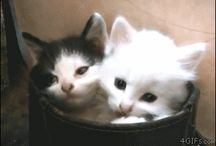 """soft kitty / for when I just need to say """"awwwwwwww!"""""""