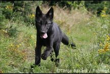 Wolves / by Amber Warnock
