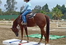 Horse obstacle /training