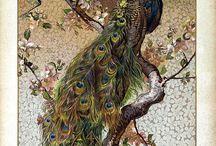Oh pretty birds
