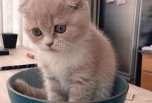 Kittens / Lovely Kitten will melted your heart.