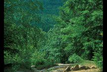 Maine   York   Mount Agamenticus