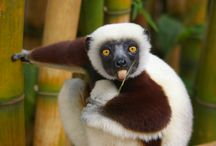 Animals / Cute, ugly, surreal - you gotta love critters!