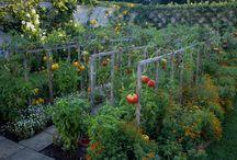 Orto In Giardino