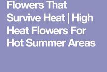 Gardening for hot gardens