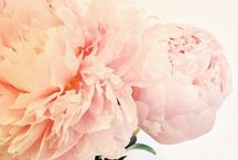 Blooms / by Melissa Noucas | The Atelier