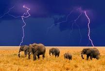 Tombé du ciel / Tombé du ciel : Une board pour réunir les photos d'orage, d'éclair, d'ouragan, de tornades, de tempête.... #Tornade #Nature #Force #éclair / by Fleurs d'avenir
