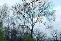 #Tree #طبيعة