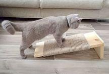 Kissi/cat