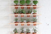 -Plant love-