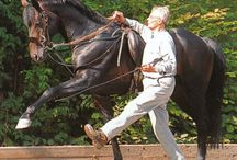 In-Hand Training for Horses