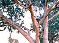 _landscapes Australia