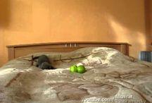 Kočky videa