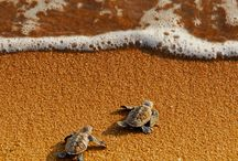 turtles. / by Sami Rice
