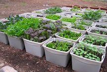 receitas de hortas em potes