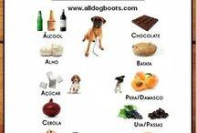 Cuidados animais