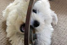 westies / by Michele Mcgee