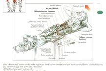 Exercises: Roman chair