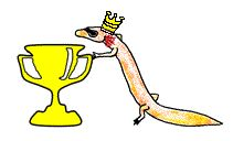 Awards & Certificates / Take a look at our printable math certificates here! / by Math Salamanders