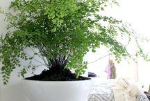 huiskamer planten