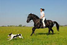 Pferde / Alles rund um Pferde.