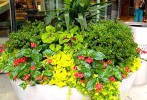 Arnyekkedvelo növények