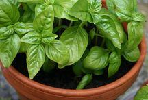 Cultivo de plantas