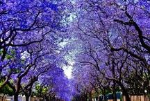 Pretoria - What, Where and When...