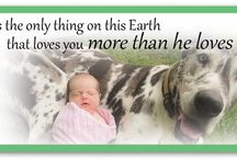 Fostering / GDU relies on foster families to help our dogs.
