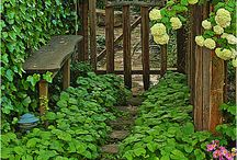 Gardening ideas / by Plum Pudding