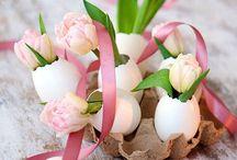 Autour des fleurs / Fleurs