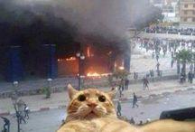 Drôle de selfie