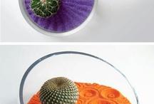 Kaktusar och andra växter