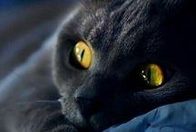 eye,animal,pussy