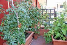 Gemüse für Balkon und Hof