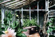 glass/green house