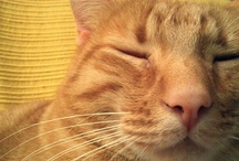 Mis gatitos