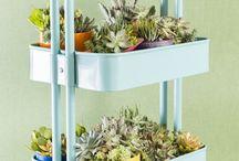 Plants - Succulents