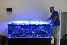 Aquarium Installation / Aquarium Installation problem? Don't worry. Contact Rent Aquarium for an excellent Installation service. Name the place and we do the work. Avail our services at