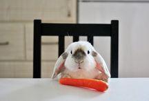 De pêlo fofinho , orelhas bem grandes eu sou um coelhinho