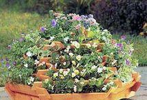 Gardening & Flowers / by Bracinda Blum