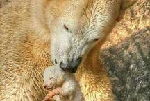 Bears / Cute / by Hannah Raunio