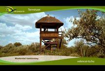Videók a Velencei-tóról / Van az a hely, ahol...