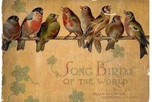 Птицы винтаж  Birds vintage