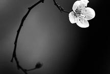 Flori alb_negru