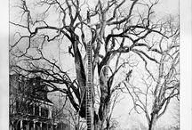 Tree Surgery History