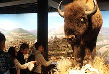 Educational Excursion: Blackhawk Museum